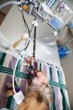 anestezi poniższy psi mały Zdjęcie Royalty Free