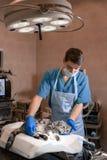Anesthesiologist przygotowywa kota dla operacji Sprawdza je?eli anestezja pracowa? Zwierz? domowe operacja Zwierz? domowe operacj zdjęcie royalty free