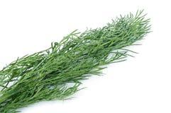 Aneth organique frais Images stock