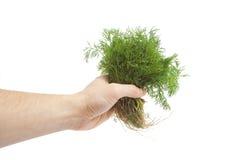 Aneth organique frais avec des fonds photographie stock