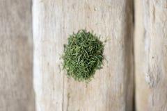 Aneth sur le bois Photographie stock libre de droits