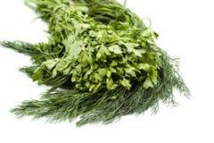 Aneto e salsa verdes frescos do jardim Imagens de Stock