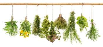 Aneto fresco delle erbe, basilico, rosmarino, timo, origano, maggiorana, Dan fotografia stock