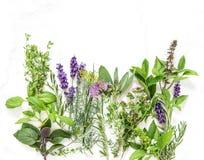 Aneto prudente della menta del timo dei rosmarini del basilico delle erbe dell'alimento fresco saporito Fotografia Stock
