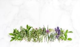 Aneto prudente della menta del timo delle erbe dei rosmarini freschi del basilico Fotografia Stock