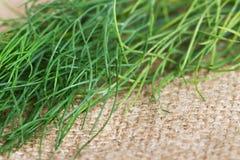 Aneto verde Fotografia Stock