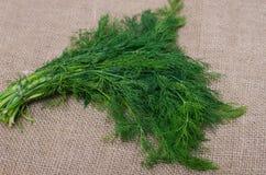 Aneto verde fresco Fotografia Stock Libera da Diritti