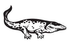 Anfíbio pré-histórico, Stegocephalia tetrapod carbonífero Whatcheeriidae Ilustração desenhada mão do vetor ilustração royalty free