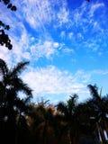 Anf bonito do céu azul em torno das árvores fotografia de stock royalty free
