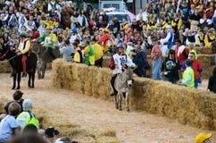 Anfang der Trüffel, die in alba angemessen ist (Cuneo), ist für mehr als 50 Jahre, das Eselrennen gehalten worden Lizenzfreie Stockfotos