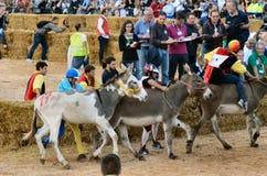 Anfang der Trüffel, die in alba angemessen ist (Cuneo), ist für mehr als 50 Jahre, das Eselrennen gehalten worden Lizenzfreies Stockbild