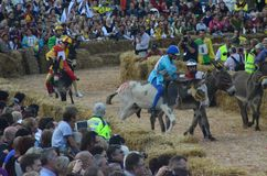 Anfang der Trüffel, die in alba angemessen ist (Cuneo), ist für mehr als 50 Jahre, das Eselrennen gehalten worden Stockbild