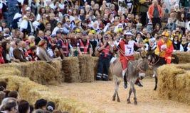 Anfang der Trüffel, die in alba angemessen ist (Cuneo), ist für mehr als 50 Jahre, das Eselrennen gehalten worden Lizenzfreies Stockfoto
