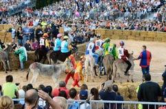Anfang der Trüffel, die in alba angemessen ist (Cuneo), ist für mehr als 50 Jahre, das Eselrennen gehalten worden Stockfotos