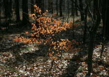 Anfang des Frühlinges im Holz stockbild