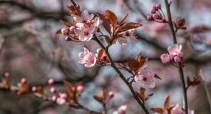 Anfang des Frühlinges mit blauem Himmel Stockfotografie
