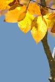 Anfang des Herbstes Lizenzfreies Stockbild