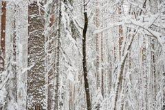 Anfang des Winters Stockfotografie