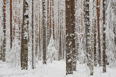 Anfang des Winters Stockfoto