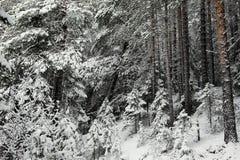 Anfang des Winters Lizenzfreie Stockfotografie