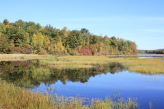 Anfangenfallfarben entlang dem Wasserrand Lizenzfreies Stockbild