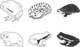 Anfibios y reptiles Fotos de archivo libres de regalías