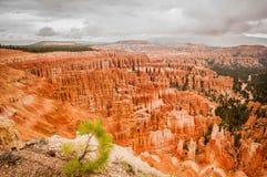 Anfiteatro del rojo de Bryce Canyon Fotos de archivo