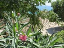 Anfiteatro e plantas Fotos de Stock