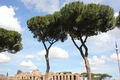 Anfiteatro en Roma stock de ilustración