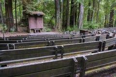 Anfiteatro en un bosque de los árboles de la secoya Fotos de archivo