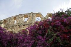 Anfiteatro romano en flores Imágenes de archivo libres de regalías