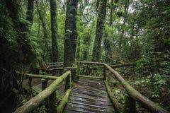 Ang钾自然痕迹的森林在土井Inthanon 库存照片