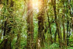 Ang Ka Luang Nature Trail immagini stock