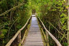 Ang Ka Luang Nature Trail fotografie stock