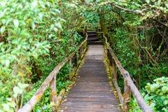 Ang Ka Luang Nature Trail fotografie stock libere da diritti