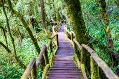 Ang Ka Luang Nature Trail immagine stock libera da diritti