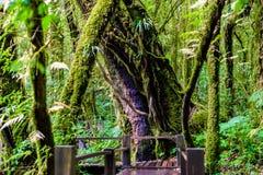 Ang Ka Luang Nature Trail fotografia stock