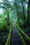 Ang Ka Nature Trail Arkivfoto
