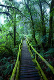 Ang Ka Nature Trail Foto de archivo