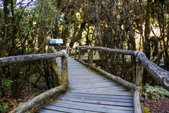Ang Ka Nature Trail al parco nazionale di Doi Inthanon Immagini Stock