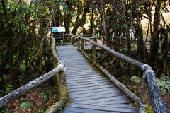 Ang Ka Nature Trail al parco nazionale di Doi Inthanon Fotografie Stock Libere da Diritti