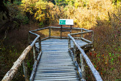 Ang Ka Nature Trail al parco nazionale di Doi Inthanon Fotografia Stock Libera da Diritti