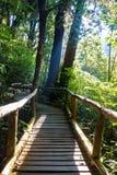 Ang Ka Nature Trail al parco nazionale di Doi Inthanon Immagine Stock