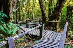 Ang Ka Nature Trail al parco nazionale di Doi Inthanon Immagini Stock Libere da Diritti