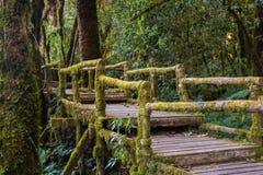 Ang Ka Nature Trail al parco nazionale di Doi Inthanon Immagine Stock Libera da Diritti