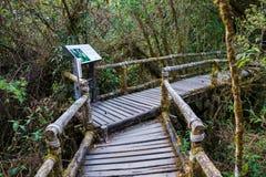 Ang Ka Nature Trail en el parque nacional de Doi Inthanon Imágenes de archivo libres de regalías