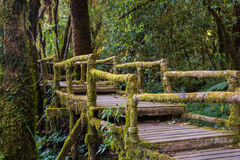 Ang Ka Nature Trail en el parque nacional de Doi Inthanon Imagen de archivo libre de regalías
