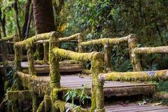 Ang Ka Nature Trail en el parque nacional de Doi Inthanon Foto de archivo