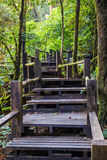 Ang Ka Nature Trail an Nationalpark Doi Inthanon Lizenzfreies Stockfoto