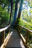 Ang Ka Nature Trail på den Doi Inthanon nationalparken Fotografering för Bildbyråer